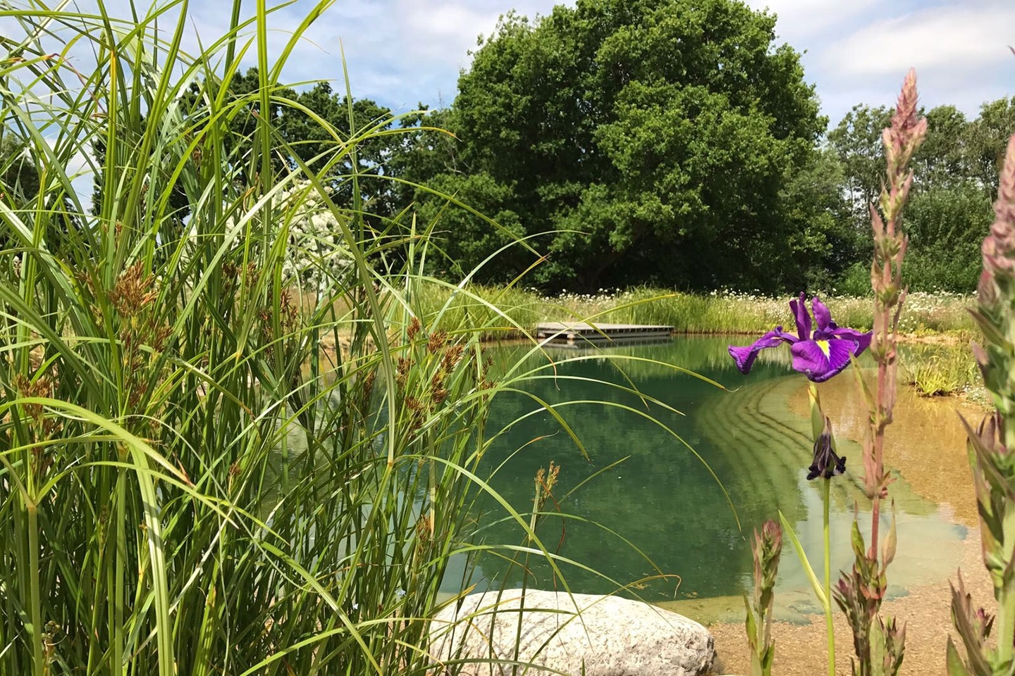 Gartenart | Portfolio | Swimming pond, East Sussex